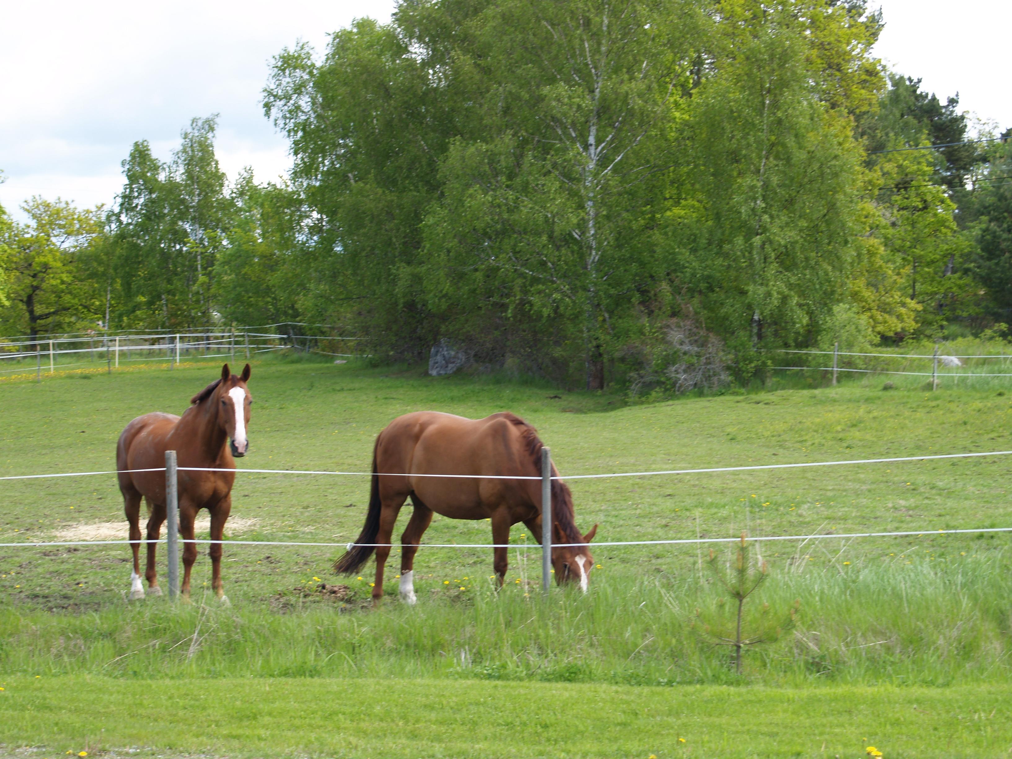 Tessab – hästgårdar